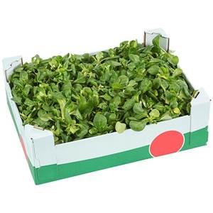 Feldsalat grün Deutschland 1kg