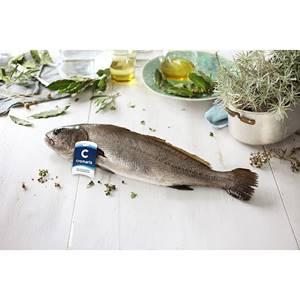 Adlerfisch Rund 2-4kg